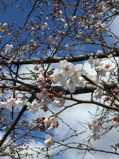 '19.04.02.桜.JPG